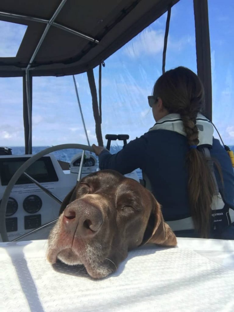 Close-up of a boat dog's face while hanging out in a sailboat cockpit