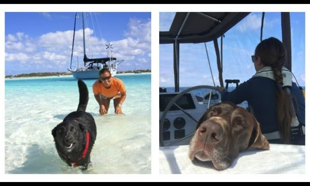 Want to sail with your dog? Three sailors share all