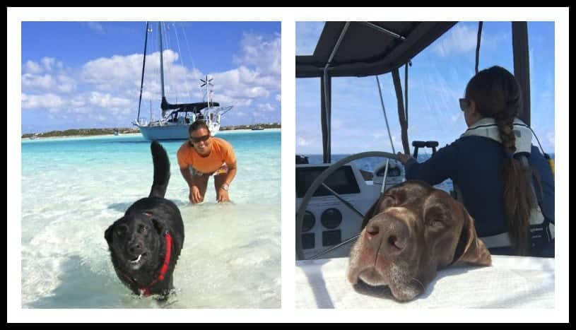How to train a boat dog for sailing