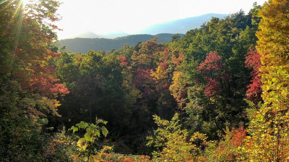 Trees with fall foliage in the Great Smoky Mountains
