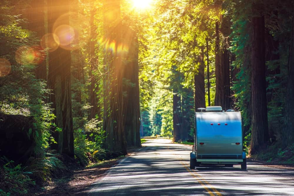 a micro camper driving through the redwoods in northern california