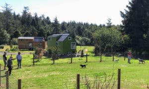 Dogs run and play at a dog park in one of Oregon's tiny house communities