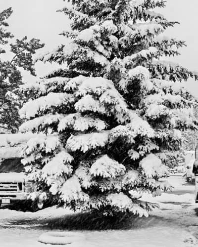 RV parked in the snow by a tree in winter - the best RV heaters will keep you warm in these conditions
