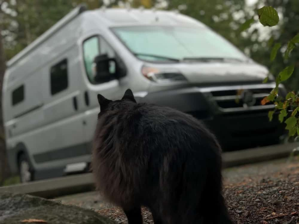 Parker the cat staring at his new campervan home.