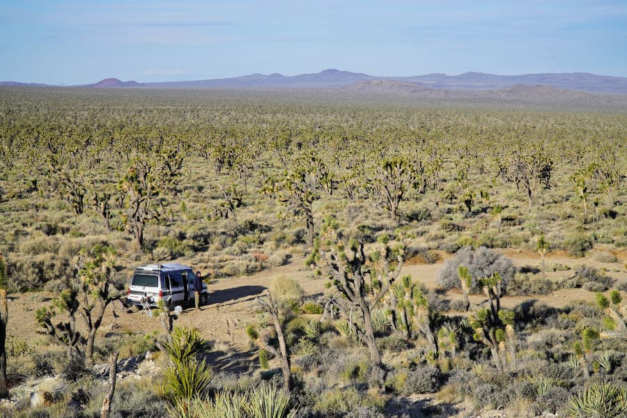 Man standing next to a campervan while boondocking amidst a Joshua Tree Forest