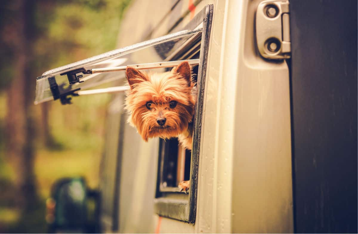 Cute dog sticking his head out of a side window of an RV, which is why you need a pet temperature monitor