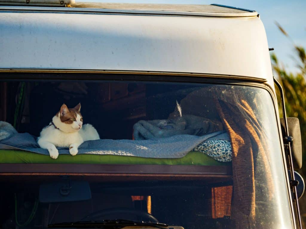 Cute cat relaxing on a bed in an RV with the best RV pet temperature monitor