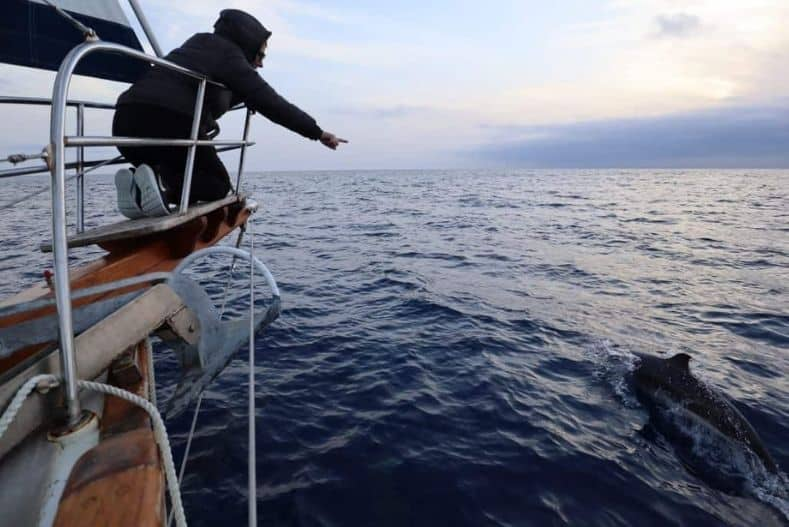 Person leans out over side of ocean crossing sailboat to point at dolphin