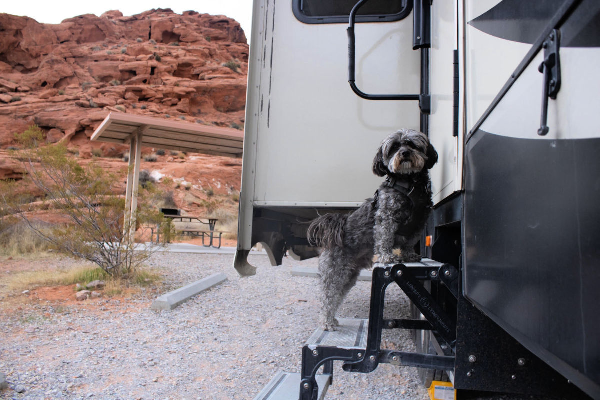 black dog standing on the steps of an RV while Rving with dogs