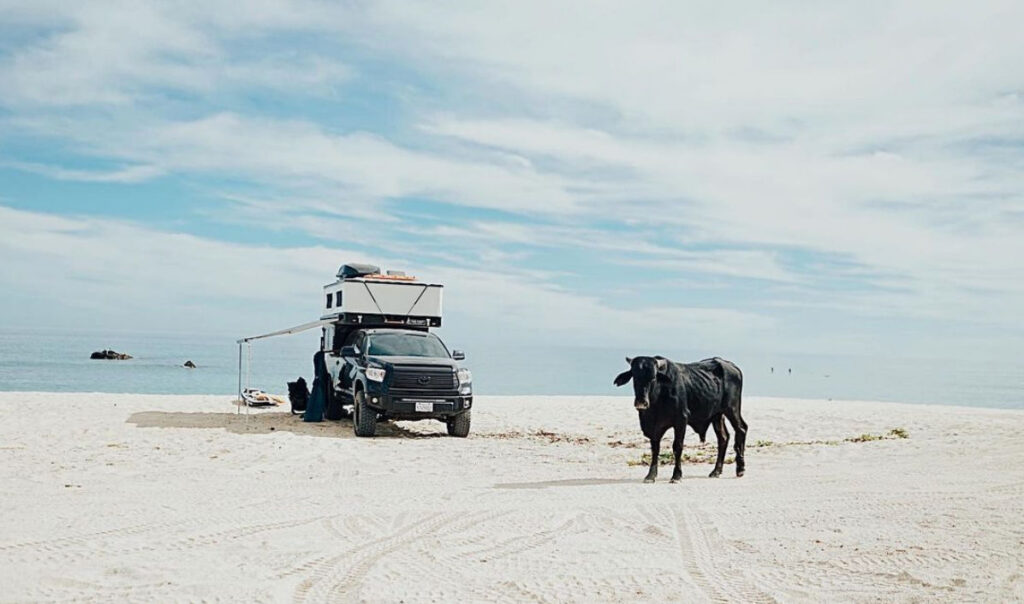 truck camper parked in Baja, mexico near a cow