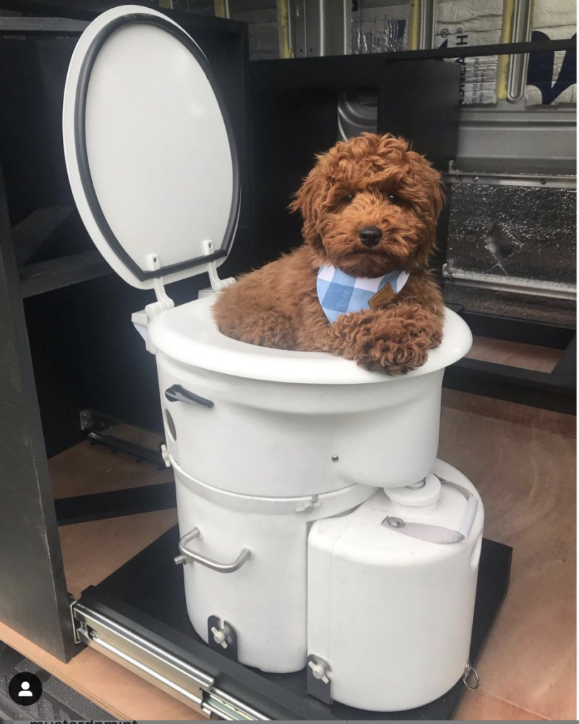 Dog inside an Airhead composting toilet